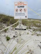 Snowy Plover nesting area Florida beach sign