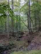 Webb Bridge Park woods