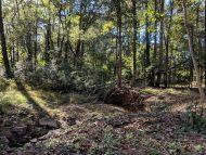 Windward woods