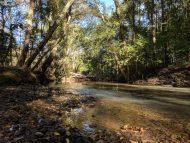 Windward woods Big Creek